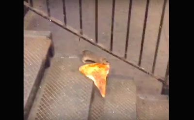new-york-city-rat-taking-pizza-home-on-the-subway