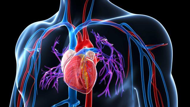 فشار بیش از حد بر روی دیواره شریانها ناشی از فشار خون بالا ممکن است به رگهای خونی و همچنین اندامهای بدن آسیب برساند