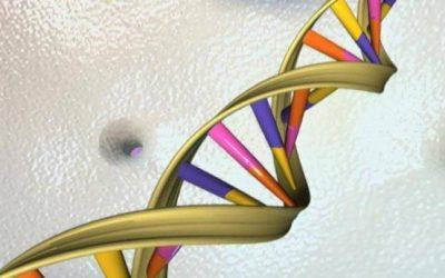 به گفته محققان؛ ژن ها در طول زمان، شکل ظاهری بینی انسان را منطبق با دما و شرایط محیط زیست شان کرده اند.