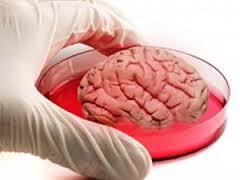نتیجه این تحقیق، قرار است با فراهم کردن امکان آزمایش مستقیم بر روی سلول های مغز، به درمان بیماری های مغزی نظیر پارکینسون کمک کند و از این به بعد، داروها را بتوان به جای مغز حیوان آزمایشگاهی، مستقیما روی سلول مغز انسان آزمایش کرد.