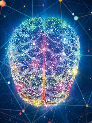 مغز انسان دارای صد میلیارد سلول عصبی (نورون) هست که تنه این سلولها عمدتا در قشر مغز بوده(قسمت خاکستری مغز)و زائده این نورونها که از تنه جدا شده، پیامها را به مناطق مختلف بدن میفرستند ( قسمت سفید مغز که در زیر قشر است). در دو دهه اخیر مشخص شده که نورونهای قشر مغز شبکه های مختلفی ایجاد کرده اند که هر کدام مسئولیت خاصی را دارند. شبکه های مغزی همانند شبکه های اتوبوسرانی، راه آهن، و راههای آبی کشتیرانی که ما در زندگی روزانه با آنها برخورد داریم، هستند.