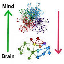 برای درک اینکه شبکه ها و ماژولها چگونه ایجاد «فکر» میکنند، میتوان آنرا شبیه یک ارکستر بزرگ دانست که در حال اجرای یک سنفونی است. اگر هر نوازنده را یک سلول عصبی (نورون) فرض کنیم، تمام نوازنده های ویلون یک نود (گره) محسوب میشوند. این نود باید با نود دیگر ، مثلا تمام نوازنده های ترومپت، هماهنگ باشند و تمامی اینها در یک قسمت ارکستر (ماژول) باید با قسمت دیگر ارکستر ،هماهنگ باشند و رهبر ارکستر نقش قطب ارتباطی( هاب) را به عهده دارد.
